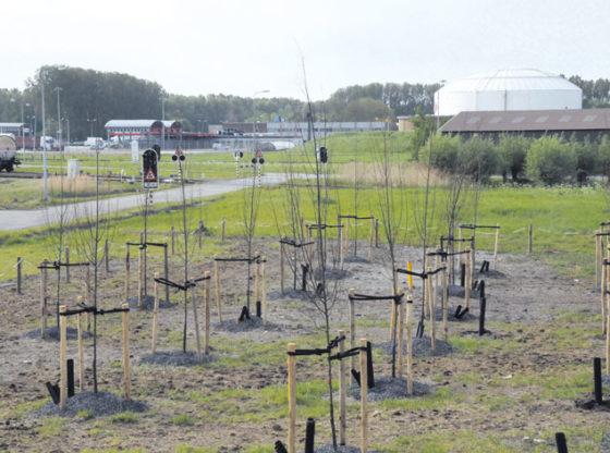 Wilgen ingezet tegen bodemvervuiling