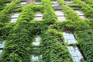 Overheid kan veel doen voor het stimuleren van groene groei