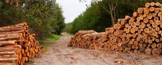 'Overheden schenden inkoopregels duurzaam hout'