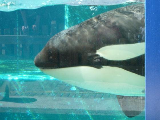 Voor de eerste keer een orka  aan de kraan