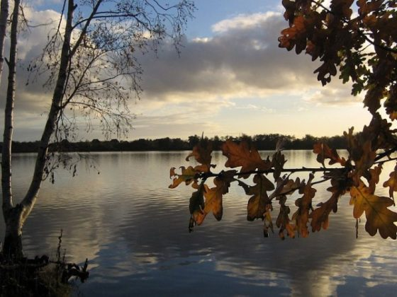 Gelderland schrapt 6000 hectare nieuwe natuur