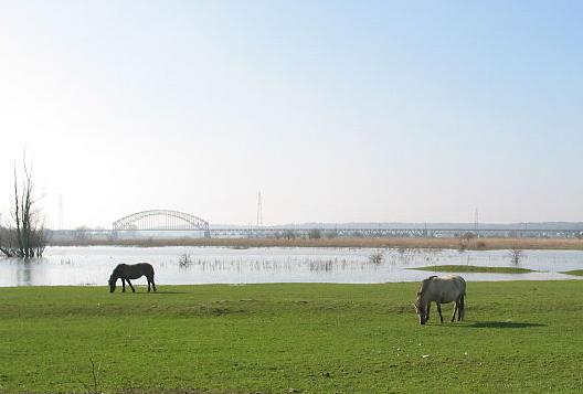 Atsma akkoord met rivierverruiming Meinerswijk