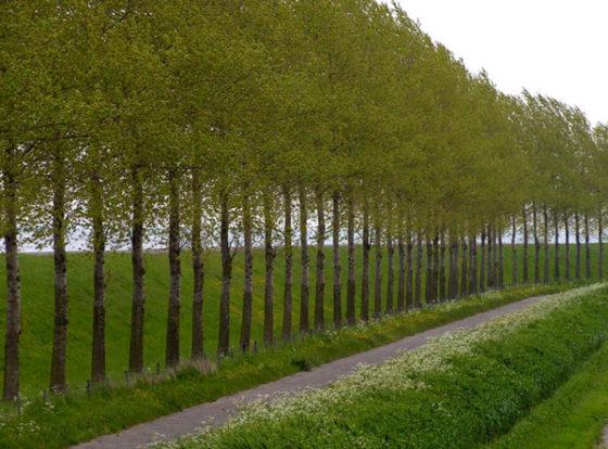 Provincie Zuid-Holland: haast maken met dijkenbeleid