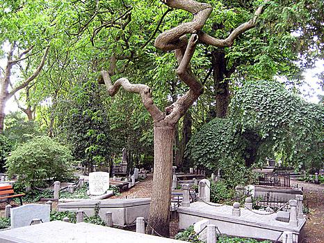Grondwaterpeil op begraafplaats omlaag dankzij zonnestroompomp
