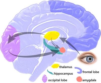 Verdieping in menselijk brein noodzakelijk voor ontwikkeling zorgwoning