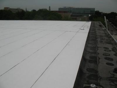 Plantaardig dak voor Statenzaal