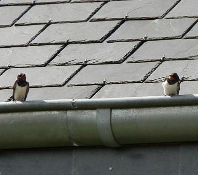 Nog geen zomer maar al wel twee zwaluwen