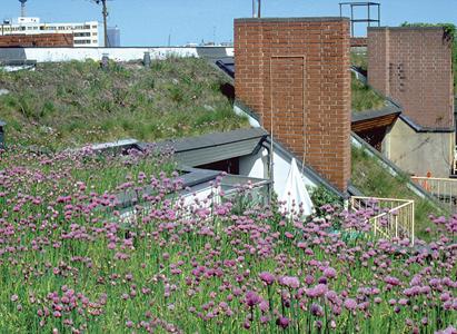 Onderhoud bij groene gevels en daken cruciaal