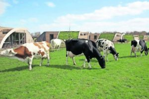 Honderden koeienstallen met zonnepanelen