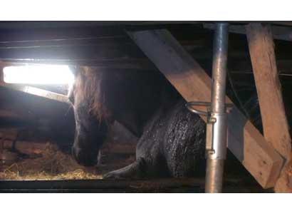 Paardenstal ingestort
