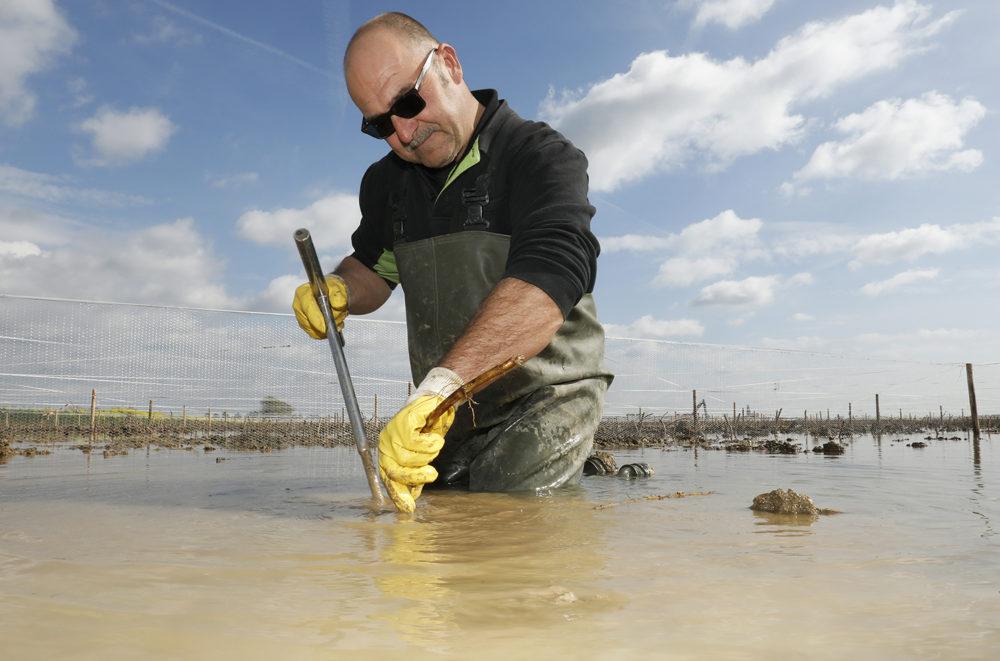 Nieuw moeras met 350 duizend rietstekjes