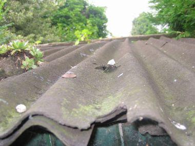 Asbest mogelijk toch vrijgesteld van stortbelasting