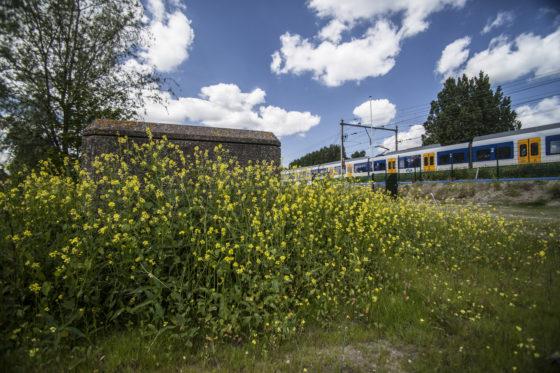 ProRail wil meer bloemetjes en bijtjes langs spoor