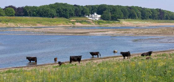 Natuurontwikkeling Grensmaas gaat stroef