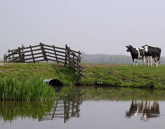 Noorden vermindert investeringen in stallen