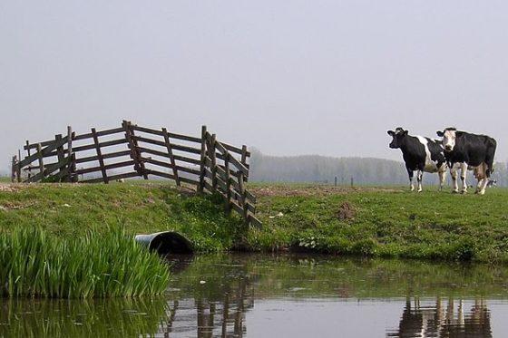 D66 wil halvering veestapel om woningbouw door te kunnen laten gaan