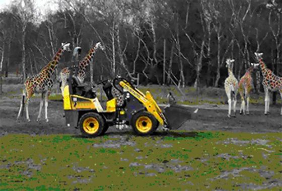 Mustang op bezoek in safaripark