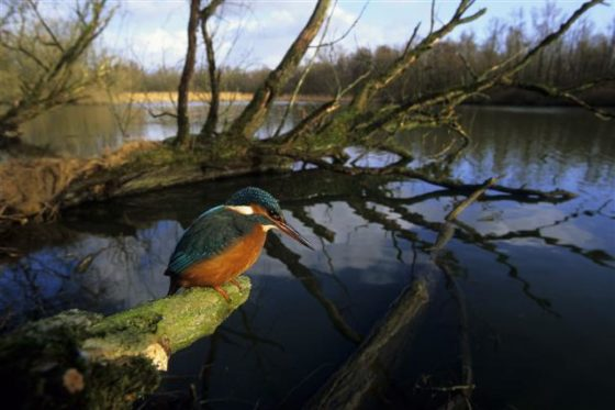 Vernietiging natuur kost 450 miljard euro