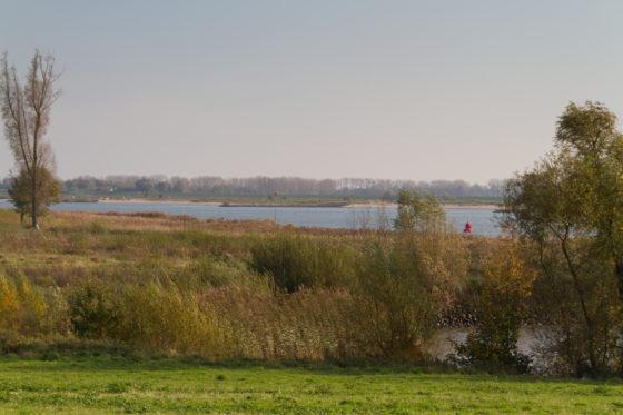 Rijkswaterstaat mag voorlopig door met kappen ooibos