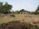 Venlo groote heide oude schietbaan schietbaan met schietpoorten foto rvb f3 80x60