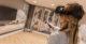 Virtualreality 80x41