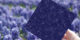 Energyra 1200x600px 0003 dsc 3071 2.jpg.c53faffa 80x40