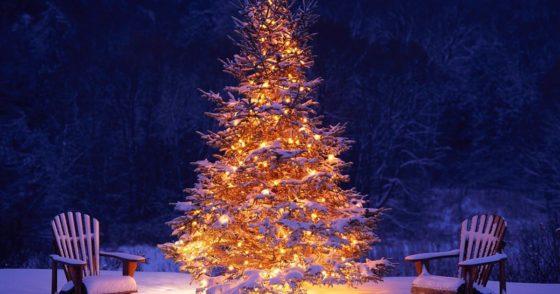 Onder de boom