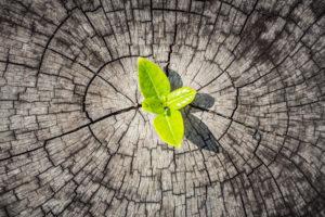 Procesmanagement: focus op draagvlak belangrijk voor succes