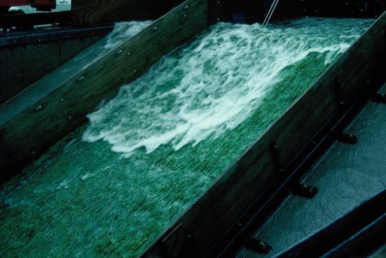 Nepstorm beukt als test op Waddenzeedijk