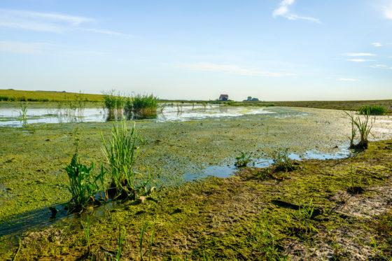 Biodiversiteit is verantwoordelijkheid van de overheid