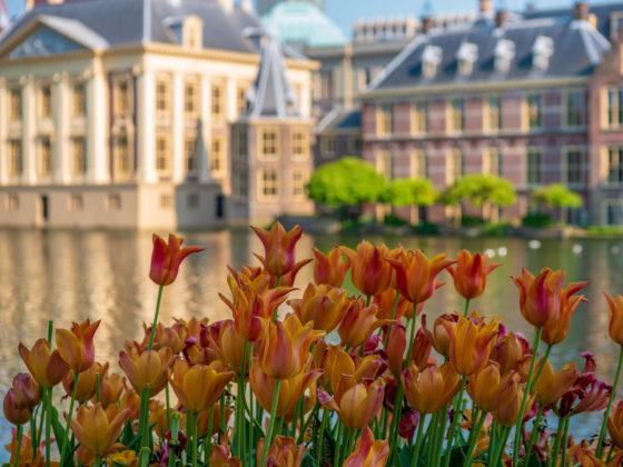 Van vegetatiedak tot waterloos urinoir, zo duurzaam wordt het Binnenhof, als er geld genoeg is