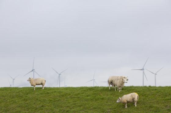 Bouw omstreden windpark gestart zonder bedreigde onderaannemer