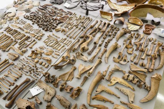 Munten, schepen, mensenresten: 'bouwer is bang voor archeoloog en dat is niet nodig'